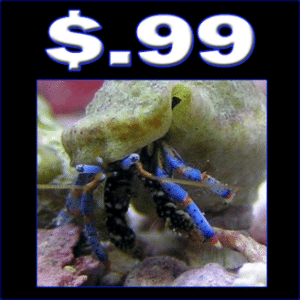 Cheap_Crabs
