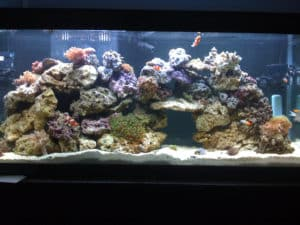 55_Gallon_Reef_Tank